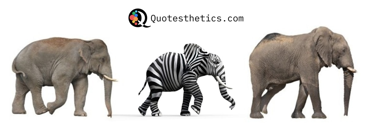 Zebra Elephants Unique Different